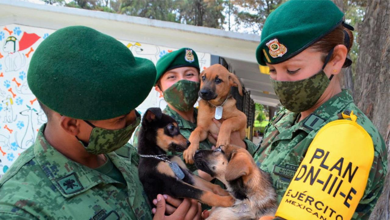 'Los perritos de Santa Lucía', refugio canino del Ejército cerca del nuevo aeropuerto