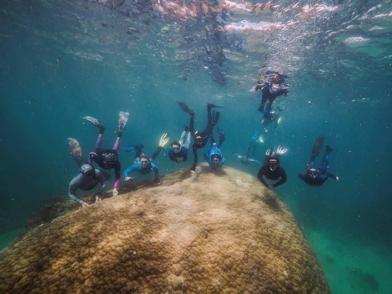 Descubren enorme coral de 400 años en Gran Barrera de Australia