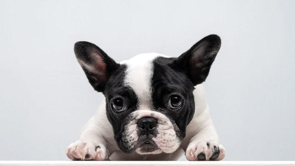 El negocio de las mascotas 2 (P-W pag.70-76)