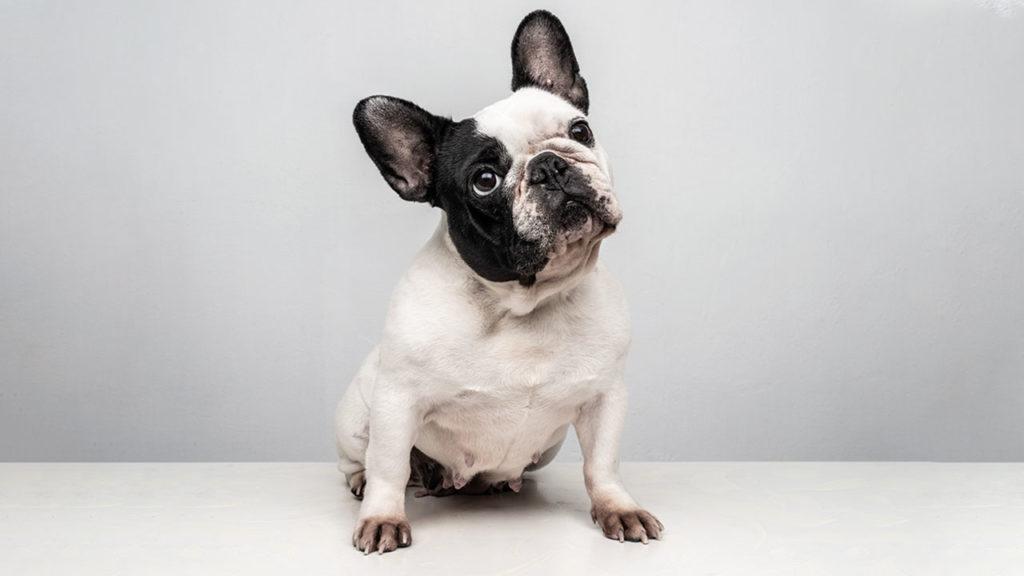 El negocio de las mascotas 4 (P-W pag.70-76)