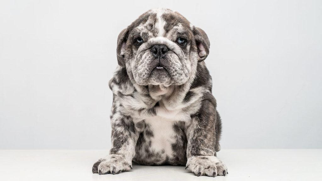 El negocio de las mascotas 5 (P-W pag.70-76)
