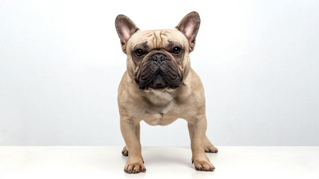 El negocio de las mascotas 6 (P-W pag.70-76)