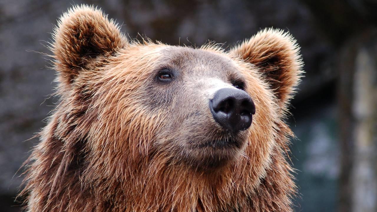 Diputado multimillonario ruso mata a un hombre al confundirlo con un oso