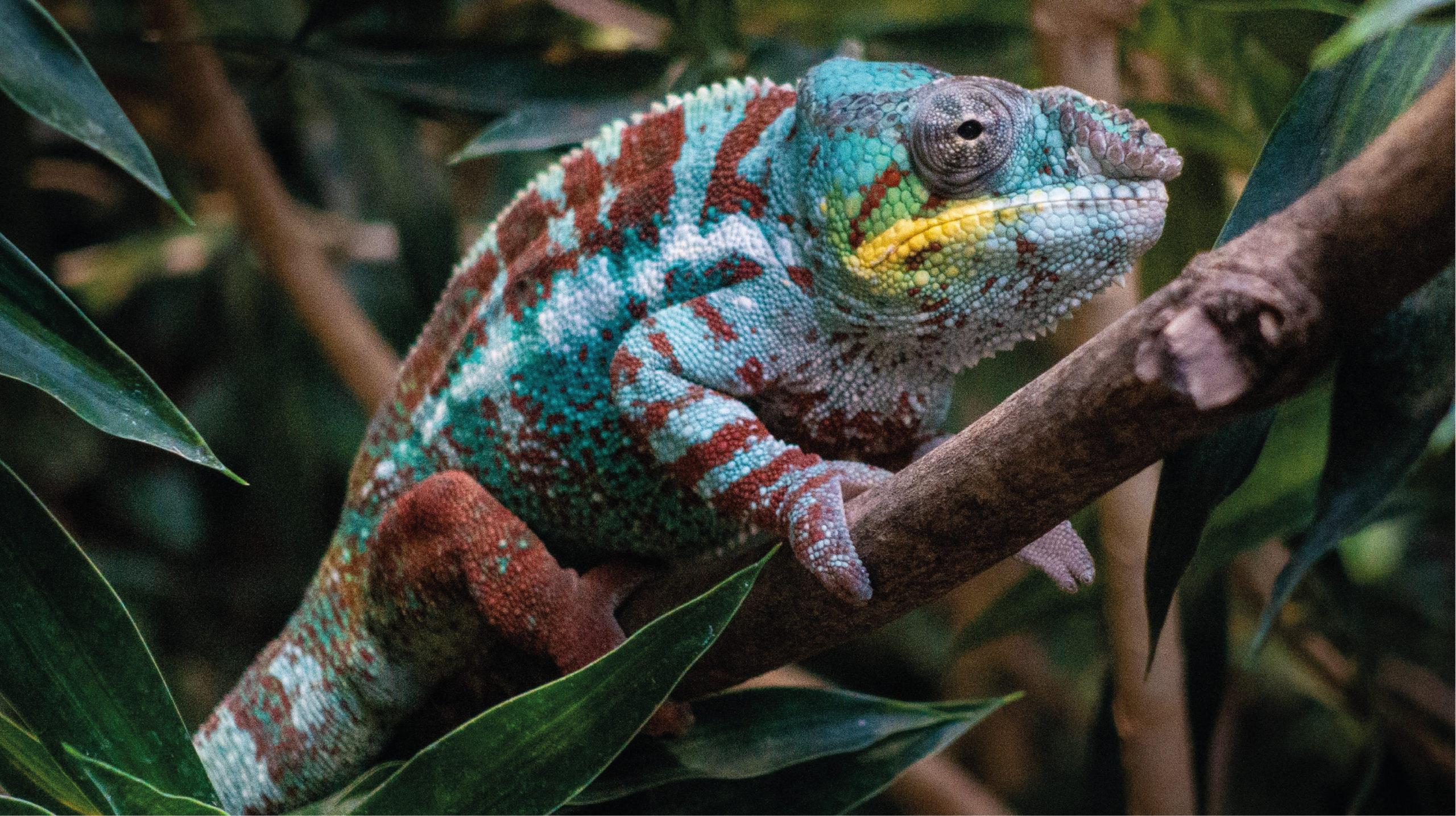 Investigadores crean piel artificial inspirada en el camaleón