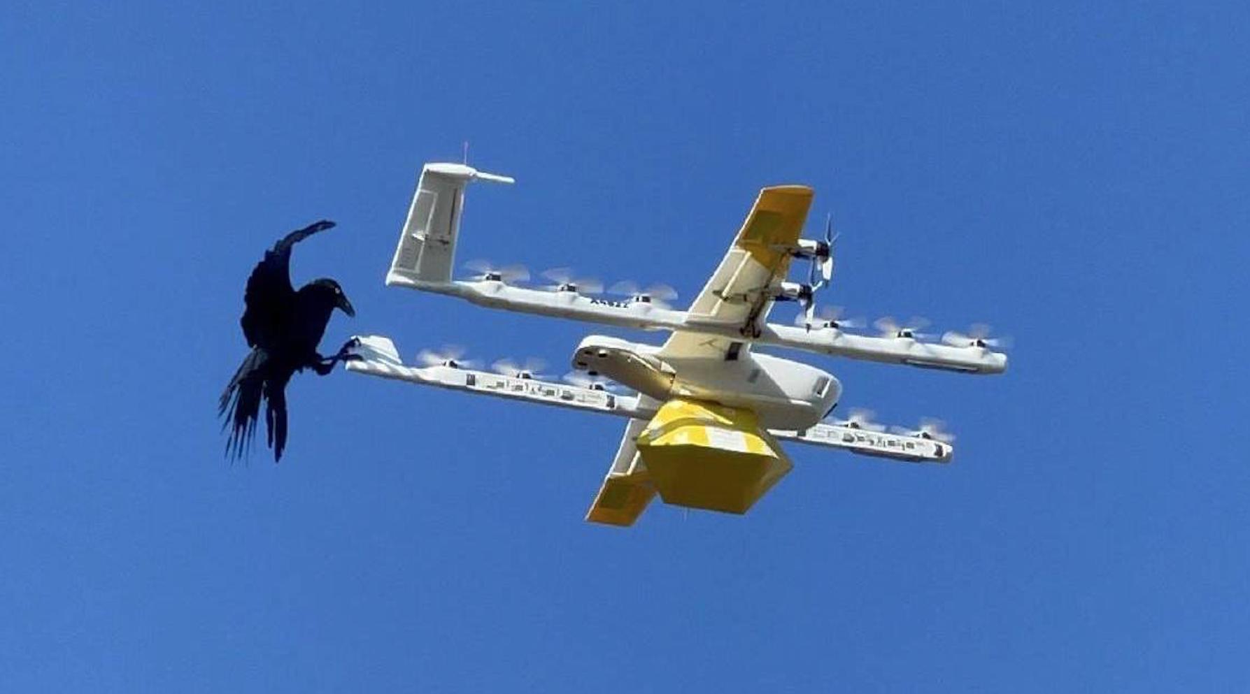 Google detiene entregas con drones tras ataques continuos de aves