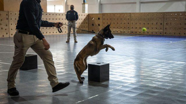 Caninos SEDENA 3