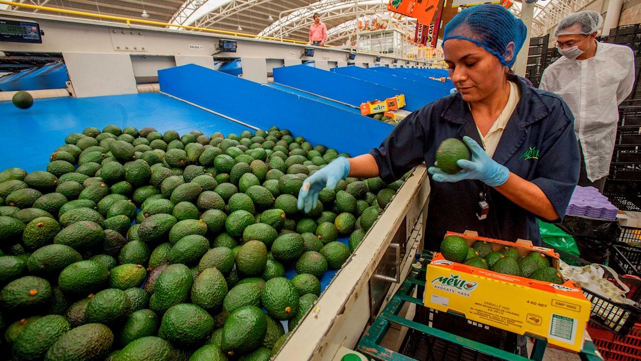 Superávit agroalimentario de México cae 38.8% entre enero y julio, interanual
