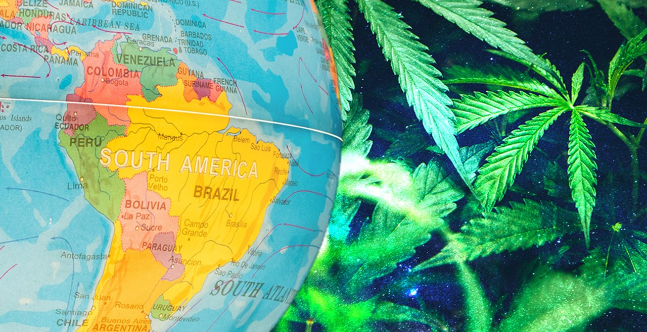 JuicyFields duplica su producción de cannabis medicinal en América Latina
