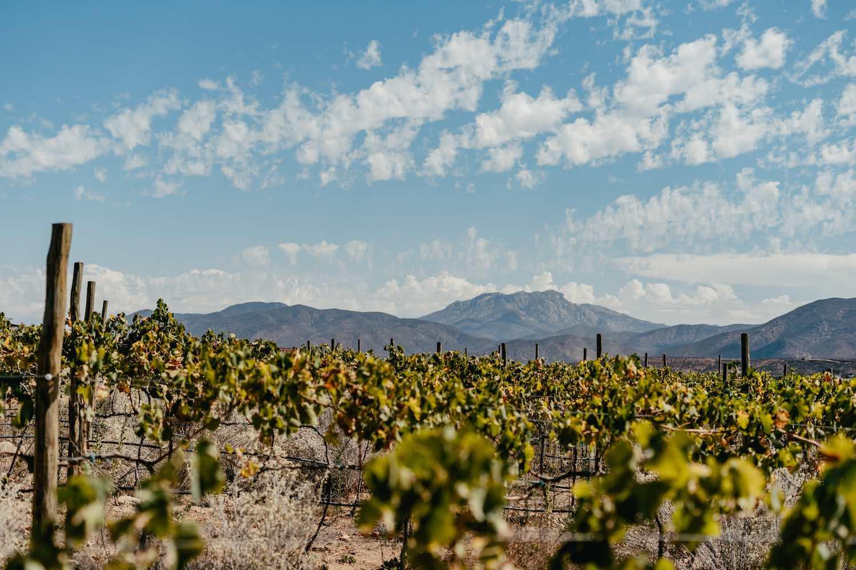 Banyan Tree anuncia próximo resort en el Valle de Guadalupe