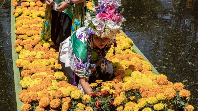 Flor Cempasúchil 5
