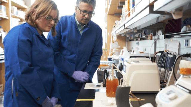riñon bioartificial UCSF Shuvo roy