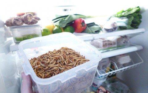 Insectos comestibles, ¿emprendimiento millonario?