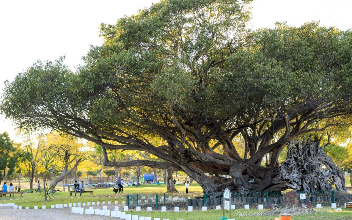 25 años de oxigenando a Guadalajara