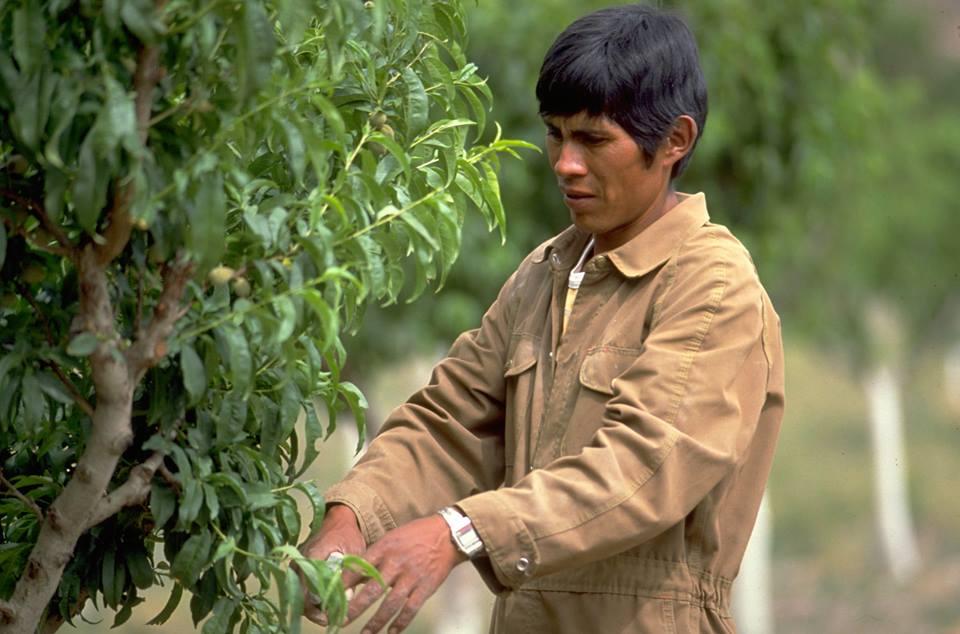 Pobreza laboral baja solo 1.6% en zonas rurales